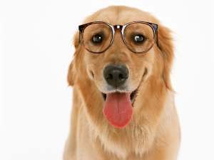 dog_wearing_glasses